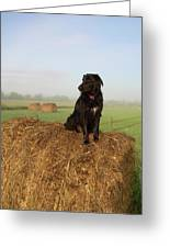 Hay There Black Dog Greeting Card
