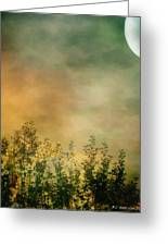 Haze On Moonlit Meadow Greeting Card