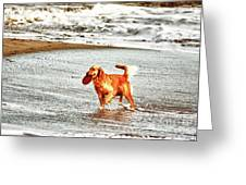 hd 342 Frisbee Dog hdr Greeting Card