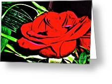 hdr 263 - Red Red Rose  Greeting Card