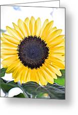 Hdr Sunflower Greeting Card