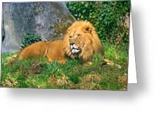 He Lion Greeting Card