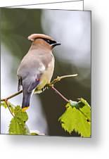 he Masked Bird Greeting Card