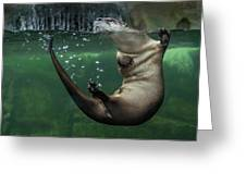 Head Above Water Greeting Card