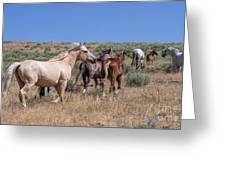 Head Em Up And Move Em Out Greeting Card