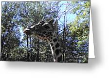 Head Giraffe Greeting Card