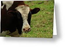 Head Of A Bull On A Farm Greeting Card