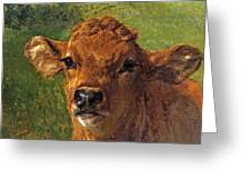 Head Of A Calf Greeting Card