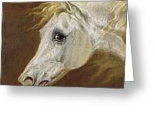 Head Of A Grey Arabian Horse  Greeting Card