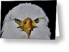 Head Of An Eagle  Greeting Card
