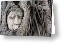 Head Of Buddha Statue In The Tree Roots Greeting Card