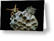 Head-on - Paper Wasp - Nest Greeting Card