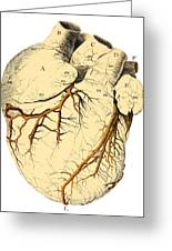 Heart Anatomy, 18th Century Greeting Card by