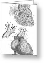 Heart Anatomy, Illustration, 1703 Greeting Card