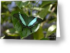 Heart Leaf Butterfly Greeting Card