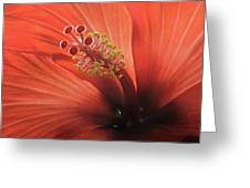 Heart Of Hibiscus Greeting Card