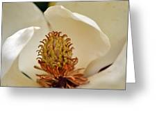 Heart Of Magnolia Greeting Card