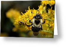 Heart Of The Bee Greeting Card