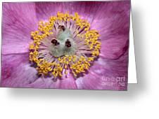 Heart Peony Greeting Card