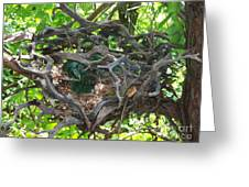 Heart-shaped Nest Greeting Card