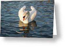 Heart Shaped Pride And Grace Greeting Card