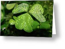 Heart Shaped With Water Drops Greeting Card