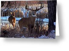 Heartbeat Of The Wild Greeting Card by Bill Stephens