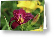 Hearts Afire Daylily Greeting Card