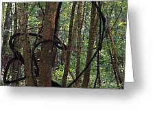 Hearts In The Woods Greeting Card