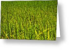 Heather Lake Grass 2 Greeting Card