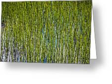 Heather Lake Grass Greeting Card