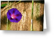 Heaven With Morning Glory Greeting Card