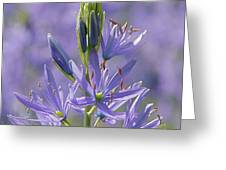 Heavenly Blue Camassia Greeting Card