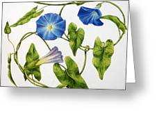 Heavenly Blue Morning Glory Greeting Card