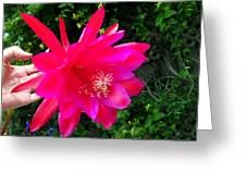 Heavenly Epiphyllum Orchid Cactus Greeting Card