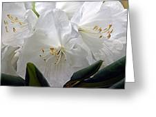 Heavenly Glimpse Greeting Card
