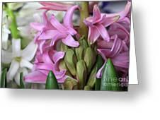 Heavenly Hyacinths Greeting Card
