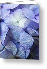 Heavenly Hydrangeas Greeting Card