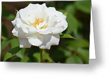 Heavenly White Rose Greeting Card