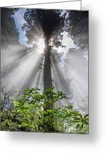 Heaven's Light Greeting Card