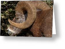 Heavy Horns Greeting Card