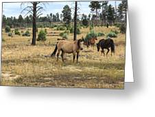 Heber Wild Horses 15 Greeting Card