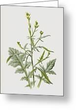 Hedge Mustard Greeting Card