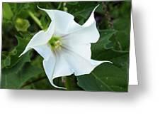 Hedgebind Greeting Card
