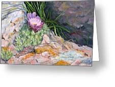 Hedgehog Cacti Greeting Card by Debra Mickelson
