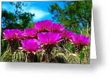 Hedgehog Cactus Greeting Card