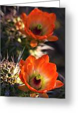 Hedgehog Flowers In Dawn's Early Light  Greeting Card