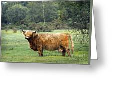 Heilan Coo Greeting Card