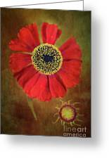 Helenium Beauty Greeting Card
