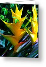 Heliconia Caribea Gold Greeting Card